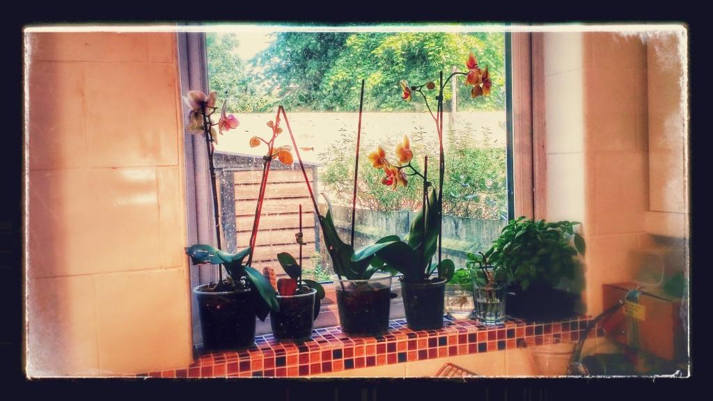 Windowsill of Orchids